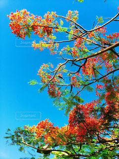 ハワイアンフラワーと青空の写真・画像素材[1633294]