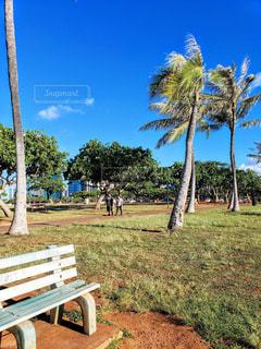 秋のアラモアナビーチパークの写真・画像素材[1633296]