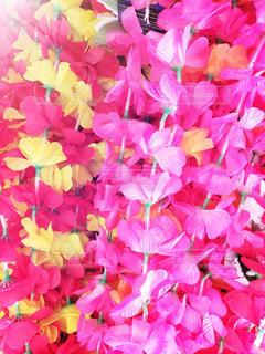 ハワイのレイの写真・画像素材[1636815]