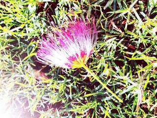 ホノルル市の公園で見つけた可愛い花の写真・画像素材[1637980]