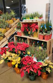 クリスマスシーズンのフードランド アラモアナ店の写真・画像素材[1656642]