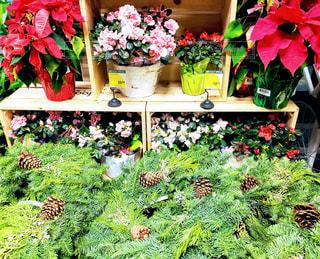 クリスマスシーズンのフードランド アラモアナ店の写真・画像素材[1660059]