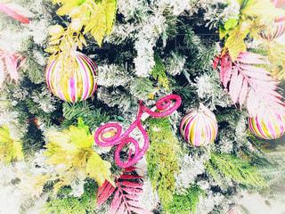 ハワイのクリスマスシーズンの写真・画像素材[1672274]