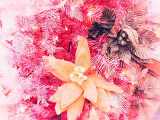ハワイのクリスマスツリーの写真・画像素材[1673707]