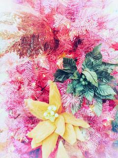 ハワイのクリスマスツリーの写真・画像素材[1673708]