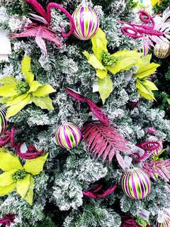 ハワイのクリスマスシーズン。。の写真・画像素材[1675722]