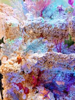 珊瑚の写真・画像素材[1765515]