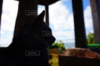 海を眺める猫の写真・画像素材[1252551]