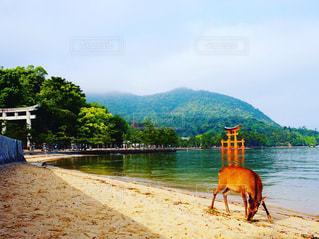 厳島神社の写真・画像素材[1261251]