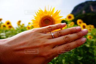 夏の結婚の写真・画像素材[1399133]