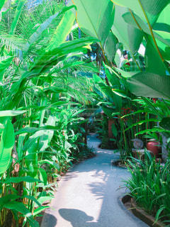 庭園の緑の植物の写真・画像素材[1236031]