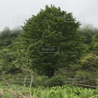 フォレスト内のツリーの写真・画像素材[1236973]