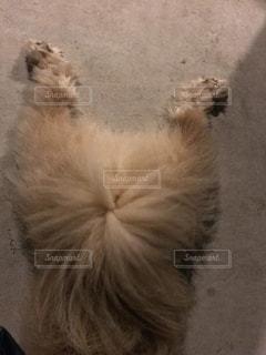犬の写真・画像素材[1245888]