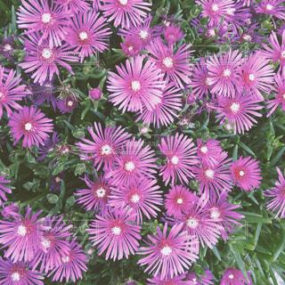 ピンクの花 - No.1237153