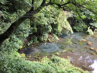 湧き水の写真・画像素材[1445551]