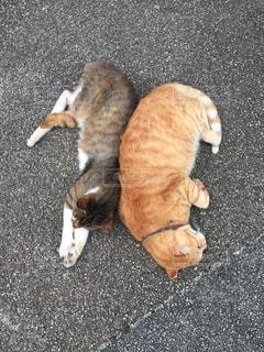 仲良し猫の昼寝の写真・画像素材[1535718]