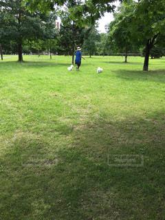 緑の公園で白い仔犬と散歩する女性の写真・画像素材[1557773]