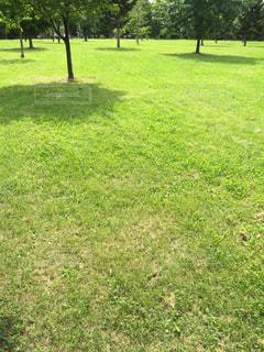 緑の絨毯、緑に囲まれた公園の写真・画像素材[1557874]