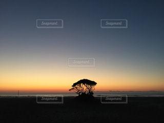 海辺にただひとり立つ木の写真・画像素材[1786570]