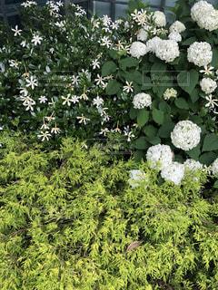 緑と白のフラワーガーデンの写真・画像素材[2203841]