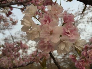 近くの花のアップの写真・画像素材[1240185]
