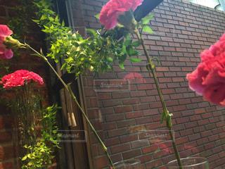 花瓶はれんが造りの建物にピンク色の花でいっぱいの写真・画像素材[1240186]