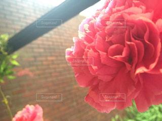 近くの花のアップの写真・画像素材[1240187]