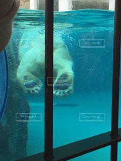 水のプールで泳ぐシロクマの写真・画像素材[1242268]