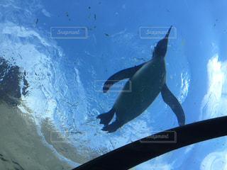 水のプールで泳ぐペンギンの写真・画像素材[1242273]