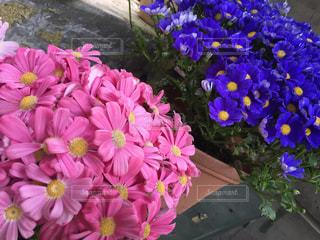 紫色の花一杯の花瓶の写真・画像素材[1246029]