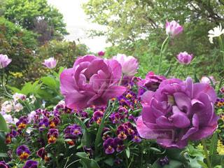 紫色の花一杯の花瓶の写真・画像素材[1246036]