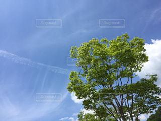 曇りの日でヤシの木のグループの写真・画像素材[1252165]