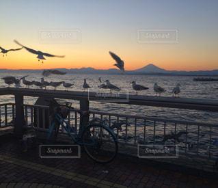 カモメの群れと夕焼け 富士山の写真・画像素材[1239485]