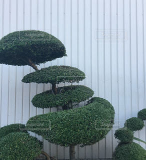 庭園の緑の植物の写真・画像素材[1252817]