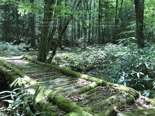 森の中の散歩道の写真・画像素材[1237437]