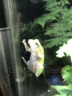 上野動物園のカエルの写真・画像素材[1237506]
