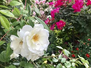 花の写真・画像素材[2167646]