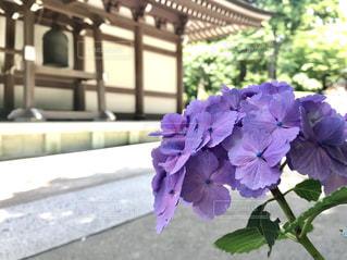 花の写真・画像素材[2167725]