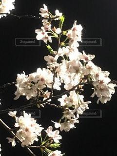 自然の写真・画像素材[40283]