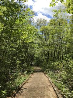 森の小道の写真・画像素材[1237884]