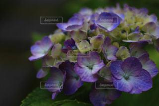 近くの花のアップの写真・画像素材[1263971]