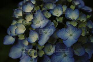 近くの花のアップの写真・画像素材[1263972]