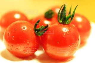 プチトマトの写真・画像素材[1386588]