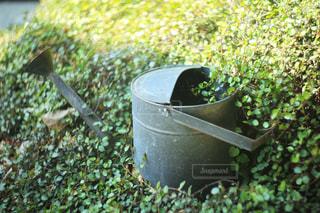 草に埋もれたジョウロの写真・画像素材[1386840]