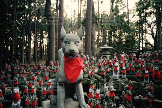霊狐塚の写真・画像素材[1386855]