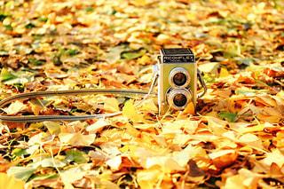 黄色い絨毯の写真・画像素材[1391367]