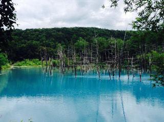 北海道美瑛の青い池の写真・画像素材[1239456]
