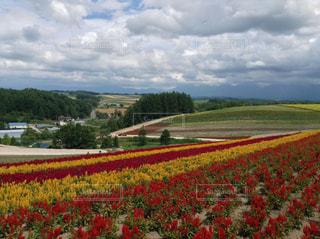 北海道の花と大地と空の写真・画像素材[1239457]