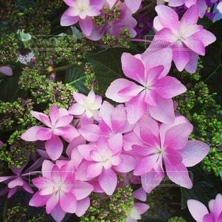 花の写真・画像素材[40772]