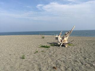 砂浜の流木の写真・画像素材[1239540]